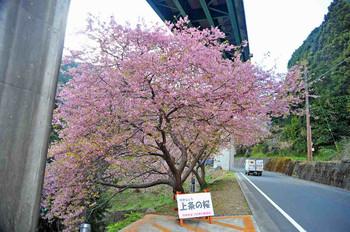 Kawazu_4470
