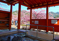Kawazu_0821
