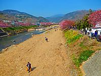 Kawazu_0880_2