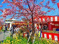 Kawazu_1060