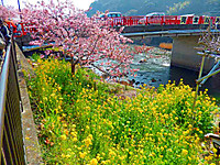 Kawazu_1190_3