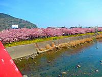 Kawazu_1210_2