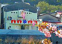 Kawazu_1351_2
