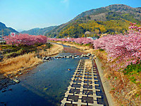 Kawazu_1630