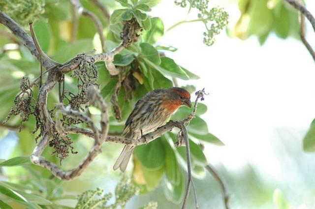 4月のハワイの野鳥