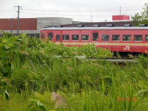 Dscn69510